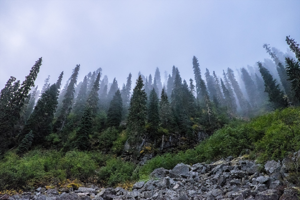 Tall slender trees in this region are unlike the trees in the north east US.